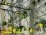 Частная усадьба «Глянц», отдых в Карпатах, отдых в Яремче, отели Яремче, проживание в Яремче, Букавель отдых, зимний отдых в Карпатах, летний отдых и проживание в Яремче_1